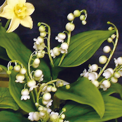 Sugarcraft Spring Flowers, Lily of the Valley